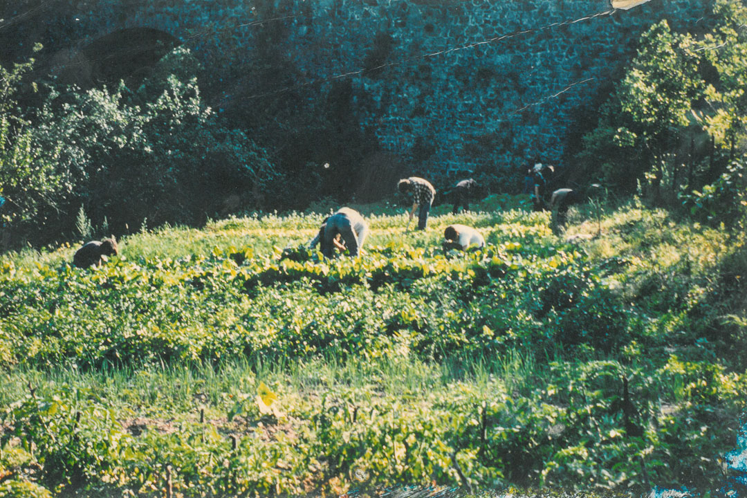 Ardelaine-Histoire-Laine-Filature-Jardin-Partage-Saint-Pierreville