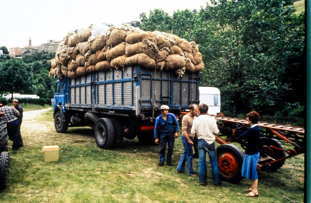 Ardelaine-Histoire-Laine-Moutons-Collecte-Ardeche