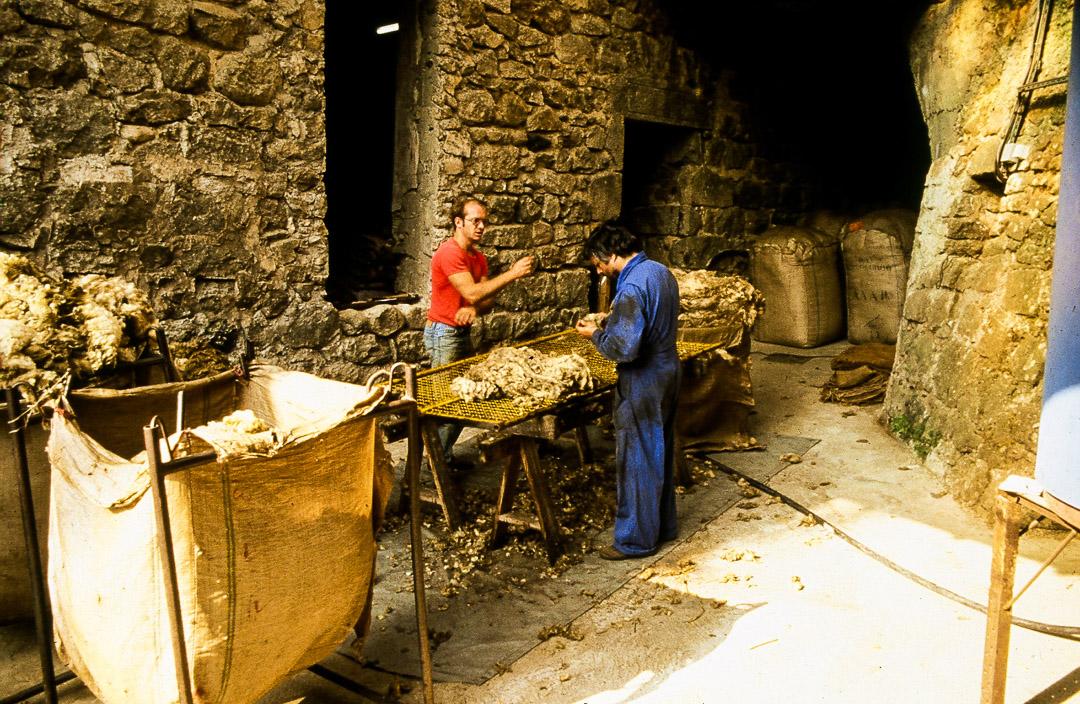 Ardelaine-Histoire-Laine-Selection-Mouton-Saint-Pierreville