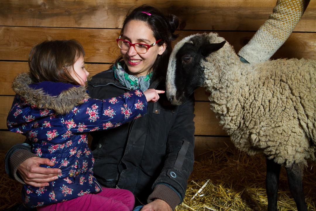 Visites-Guidees-Moutons-Laine-Enfants-Familles