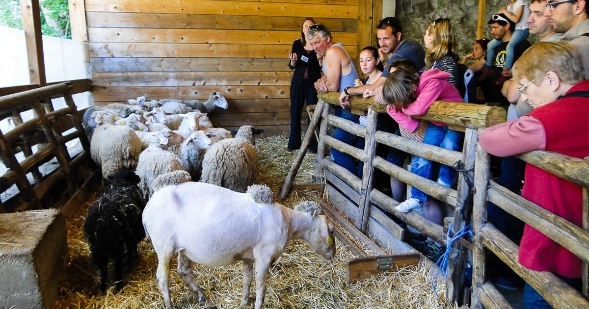 Faire-en-Ardèche-Tourisme-Visite-Groupe-Musée-Ardelaine-facebook