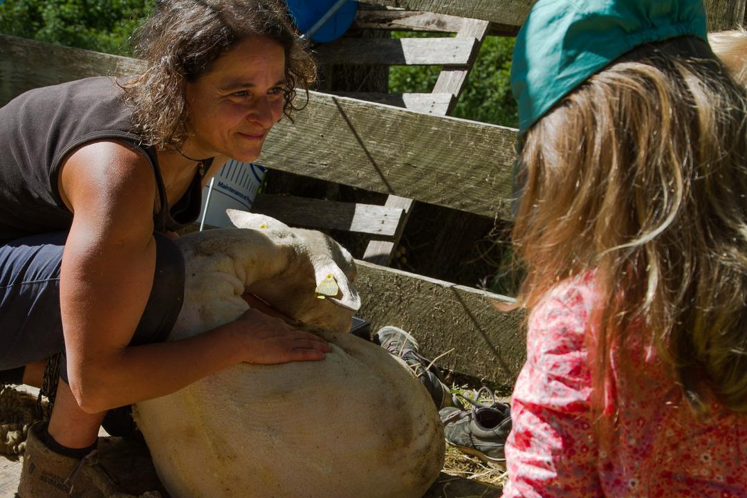 Démonstration-Tonte-Mouton-Enfants-Famille-Ardelaine