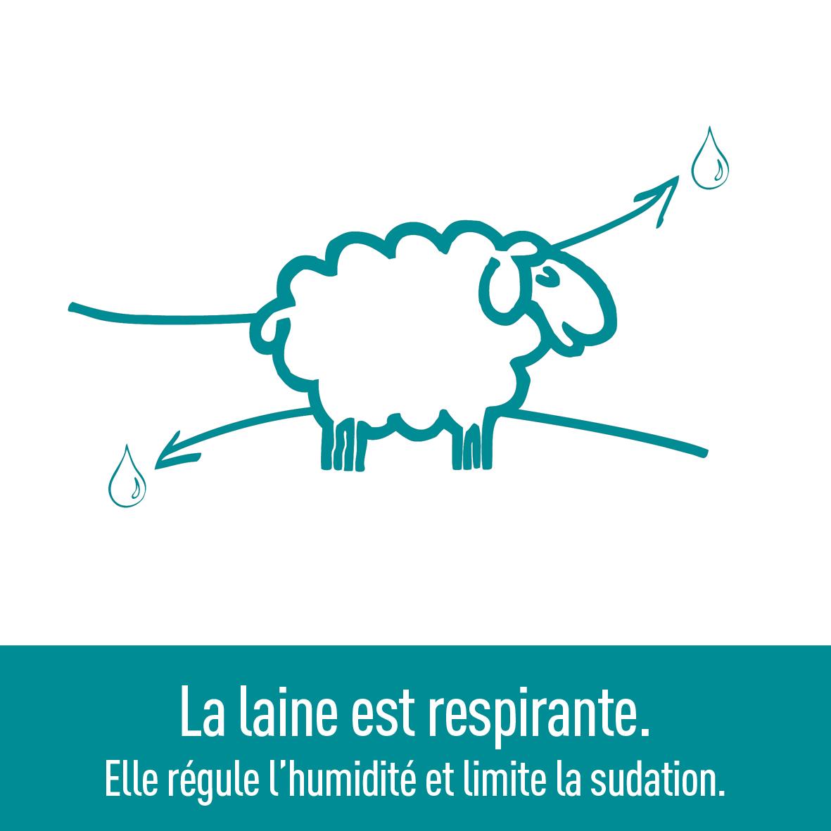 laine-qualité-régulation-humidité-respirante-ardelaine