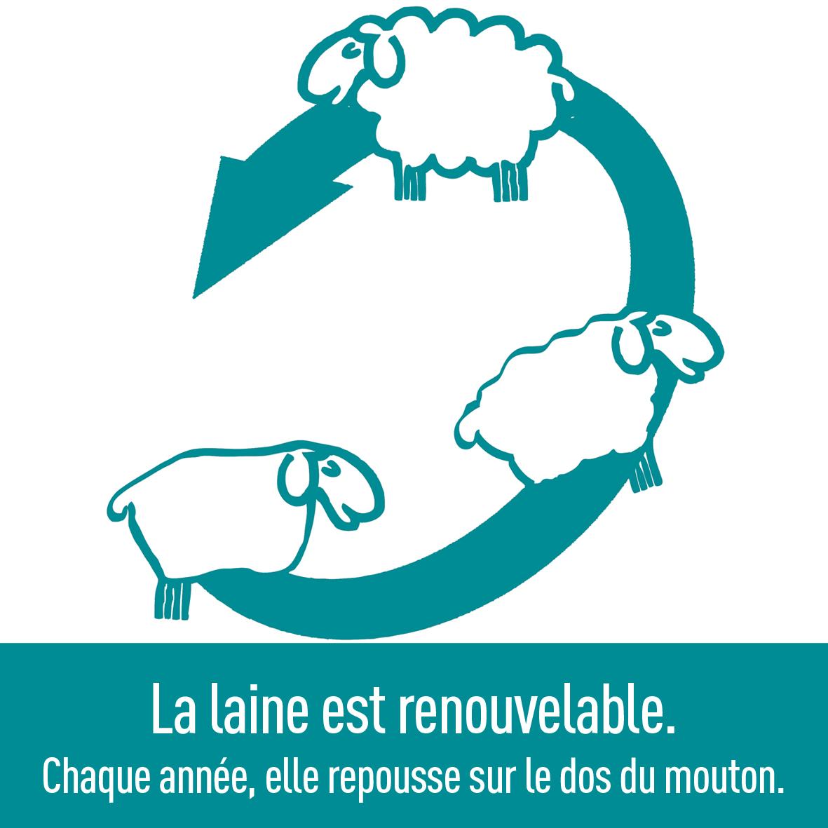 laine-qualité-renouvelable-naturelle-écologique-ardelaine